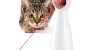chat-laser-automatique